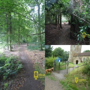 Bow Brickhill church and woods collage, showing dog in front of the church and two of the trails