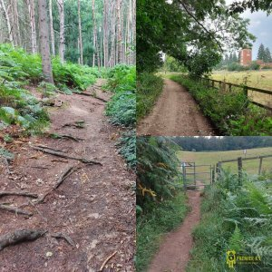 Collage of pictures from the woods at rRshmere country park