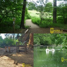 collage of 3 pictures of Rushmere